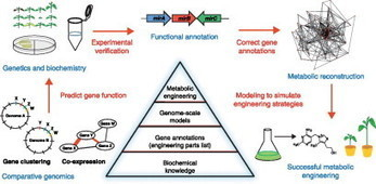 Comparative genomics approaches to understanding and manipulating plant metabolism   Plant Genomics   Scoop.it