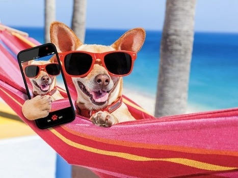 What Can Instagram's Most Popular Pets Teach You About Marketing? (Infographic)   Surviving Social Chaos   Scoop.it