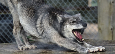 Why Do Dogs Yawn? The Neuroscience Of Empathy | Empathy and Compassion | Scoop.it