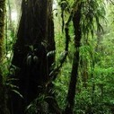 New Insight on How Tropical Forests Capture Carbon   CleanTechies Blog - CleanTechies.com   Sustainable Futures   Scoop.it