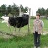 Les élevages exotiques en France