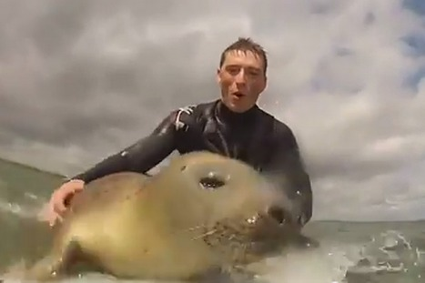 Surfing SEAL surprises duo by climbing on board and riding the waves for almost an hour | In Today's News of the Weird | Scoop.it