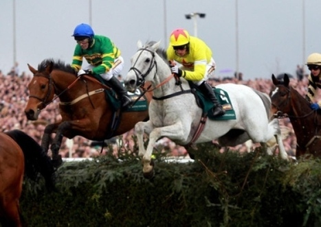 British Grand National winner Neptune Collonges starts dressage career with a big win- Yorkshire Post   The Jurga Report: Horse Health, Welfare, and Care   Scoop.it