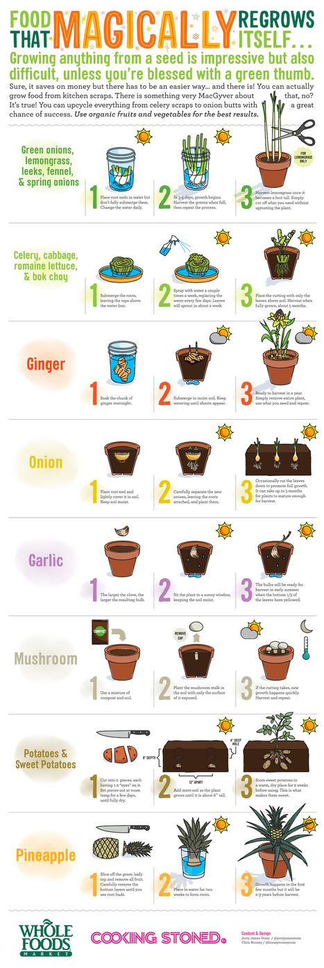 Food That Magically Regrows Itself from Kitchen Scraps | Aquaponics for Aquarists | Scoop.it