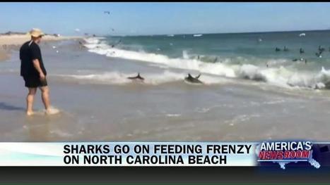 Beachgoers Witness Massive Shark Feeding Frenzy | Motorhome Madness | Scoop.it