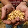 Isabella's GMO