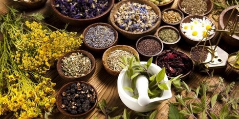 Herbal Medicines from Mexico | Mexperience | The Joy of Mexico | Scoop.it