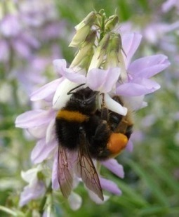 Stress a key factor in causing bee colonies to fail | Plant Based Nutrition | Scoop.it