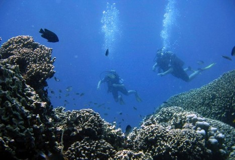 Coral cultivation offers hope for damaged Indian Ocean reefs - TrustLaw | Marine Conservation | Scoop.it