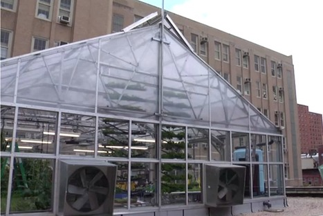 St. Paul greenhouse demonstrates a bold new direction in urban farming | Growing Food | Scoop.it