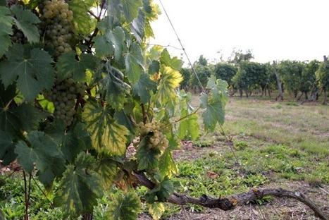 Agriculture : un bilan 2016 contrasté en Charente-Maritime | Agriculture Aquitaine | Scoop.it