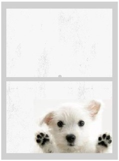Cleaning Dog Nose Prints Off Windows   A Clean, Green Home   Scoop.it