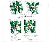 Ligand action on sodium, potassium, and calcium channels: role of permeant ions   Neuroscience_topics   Scoop.it