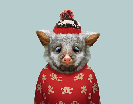 Incredibly Cute Portraits of Baby Animals Dressed Like Humans | Le It e Amo ✪ | Scoop.it