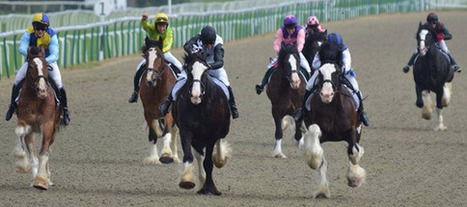 Earth moves as Shire horses race in Britain | Horses  around the world | Scoop.it