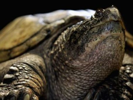 Man Tries To Enter Canada With 51 Turtles In His Pants | The Wild Planet | Scoop.it