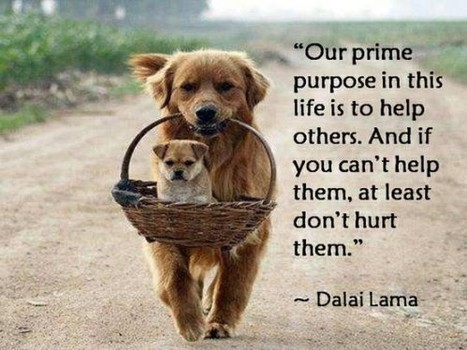 OUR PRIME PURPOSE IN THIS LIFE... | Quote for Thought | Scoop.it