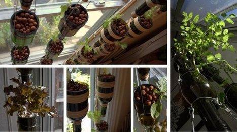 Un jardin potager... à l'intérieur de ma maison | Agriculture urbaine, architecture et urbanisme durable | Scoop.it