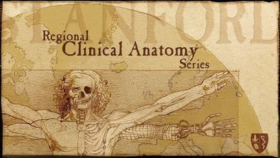 Anatomy | E-Learning Suggestions, Ideas, and Tips | Scoop.it