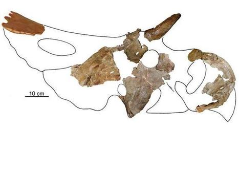 Paleo Profile: The Northern Nasutoceratopsian | Geology | Scoop.it