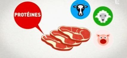 Linguo.tv - Apprendre le français avec des sous-titres de vidéos | fle&didaktike | Scoop.it