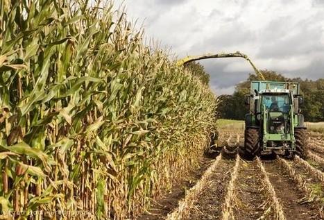 La France à nouveau face à la menace OGM | Nature Animals humankind | Scoop.it