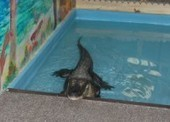 Poll: Would You Have an Alligator Pool Party? | Clearwater Beach Florida | Scoop.it