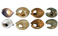 GB : Prehistoric beads were made from British shells | World Neolithic | Scoop.it