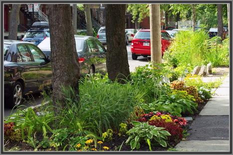 La préservation de la nature en ville avec Guerilla Gardening - CiteMag | revue de johane | Scoop.it