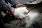 Thailand's unfeasible rice trick   Thailand Business News   Scoop.it