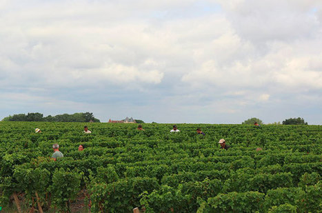 Anson: Bordeaux 2016 harvest report - how the vintage looks - Decanter | Planet Bordeaux - The Heart & Soul of Bordeaux | Scoop.it