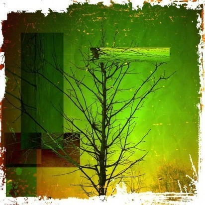 Decomposition of a tree | Appertunity's fun & creative iphone news | Scoop.it