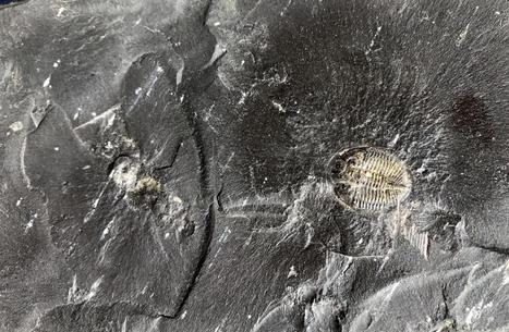 Study: Fossil fuel formation enabled life as we know it to evolve | Geology | Scoop.it