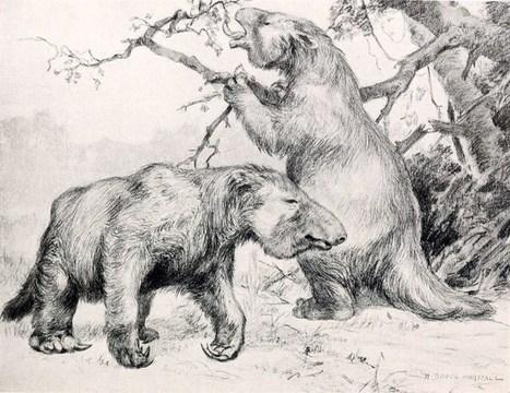 El extinto perezoso gigante era vegetariano | P...