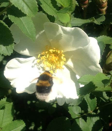 the blackberry garden | Cool Sites I love | Scoop.it