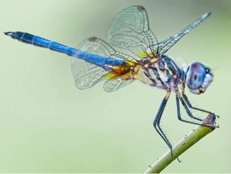 Dragonflies and frogs inspired the best of biomimicry in 2013 | Sustainable Futures | Scoop.it