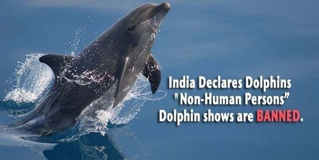 "India Declares Dolphins ""Non-Human Persons"", Dolphin shows BANNED. 
