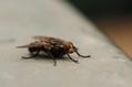 RADIO ....Les insectes au menu de l'alimentation de demain  - France Info   Entomophagy: Edible Insects and the Future of Food   Scoop.it