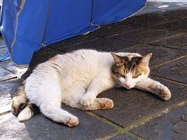 Diabetes and obesity in cats | Cat Health News from the Winn Feline Foundation | In Your Pet's Best Interest | Scoop.it