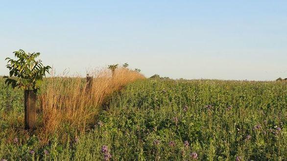 Monter son projet agroforestier : les étapes clés