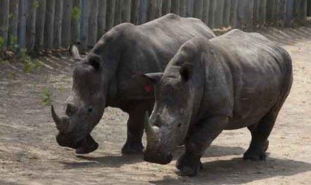Rhino poacher shot dead in KZN - Eyewitness News | Help save our Rhinos | Scoop.it