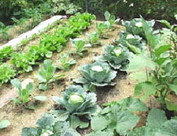 No-till Gardening | Eartheasy Blog | Gardening Inspiration and Information | Scoop.it
