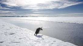 Nations push to protect Antarctica's 'last ocean' - BBC News | All about water, the oceans, environmental issues | Scoop.it