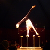 All about circus
