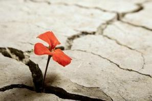 How To Bounce Back From Failure - Happiness isn't the opposite of depression..resilience is   Joy and Business   Scoop.it
