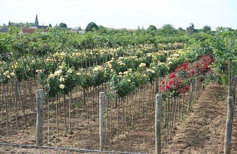 Innoplante : Un nouvel outil pour la diversification végétale en pépinière | HORTICULTURE BOTANIQUE | Scoop.it