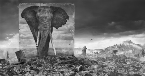 Towering Animal Portraits Haunt the Africa That the Creatures Once Roamed | Food for Pets | Scoop.it