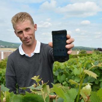 Pour les vendanges, les vignerons recrutent aussi sur internet   BeginWith   Scoop.it