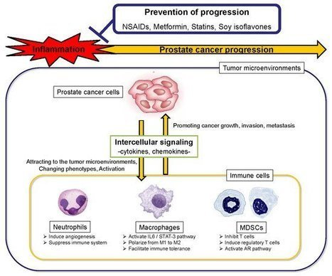 Cells | Free Full Text | Natural Compounds in Prostate