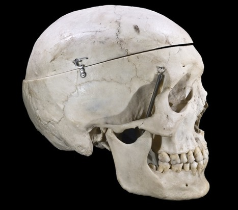Forensic anthropology – the need for Australian standards | forensic anthropology | Scoop.it